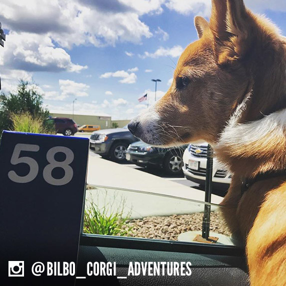 A dog name Bilbo stares out of a car window and a Culver's to-go tag sits next to him.
