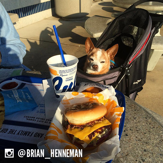 A dog name Rocco sits in a stroller and looks at a Culver's cup and a Culver's Deluxe.