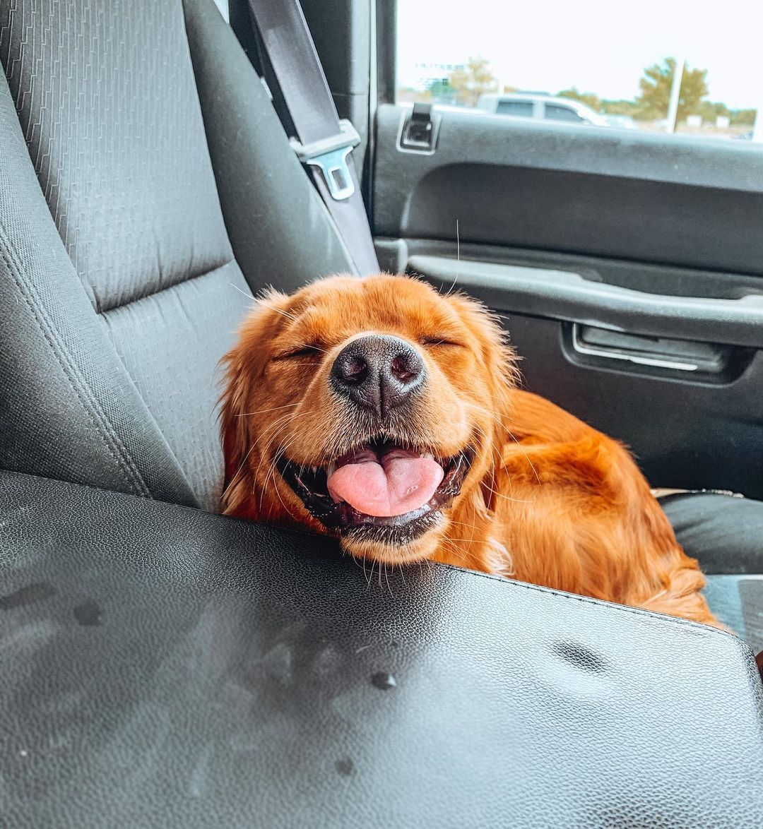 Dog in the backseat of a car in the Culver's drive-thru