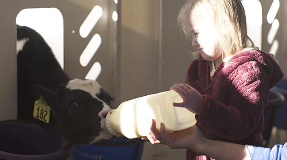 Inset image: daughter feeding calf