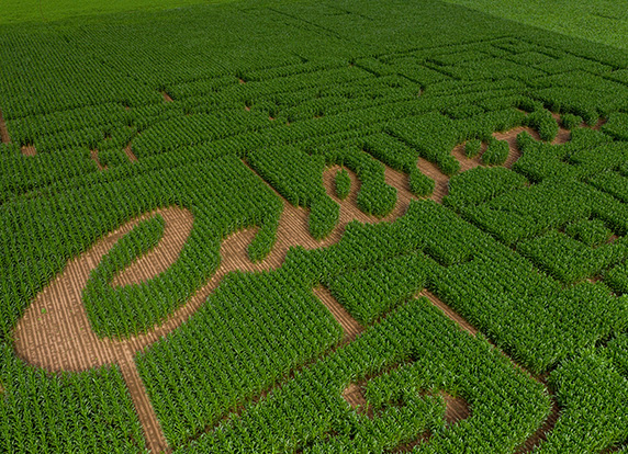 Corn maze featuring a Thank You Farmers Project design.