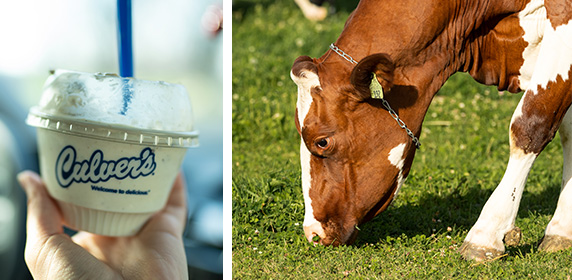 Collage image of cow and dish of Fresh Frozen Custard